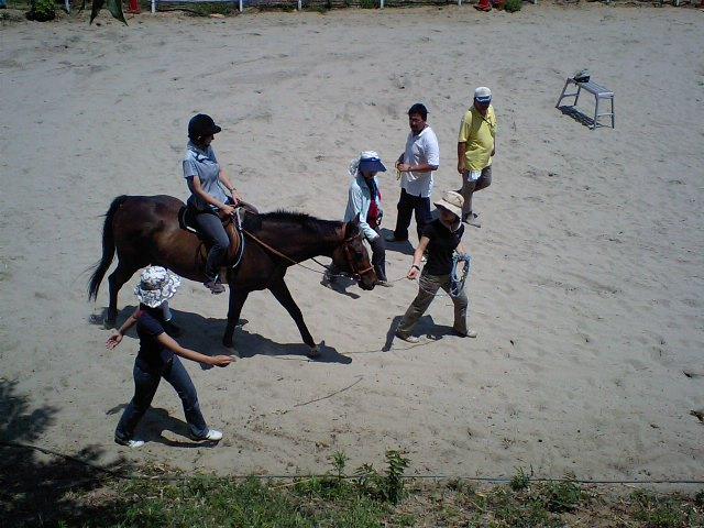 障害者乗馬ライディングヘルパー資格取得講座