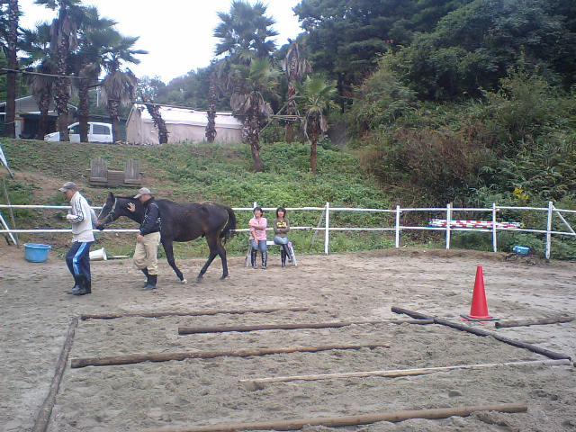 馬の動きを考える