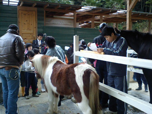 馬の身体測定