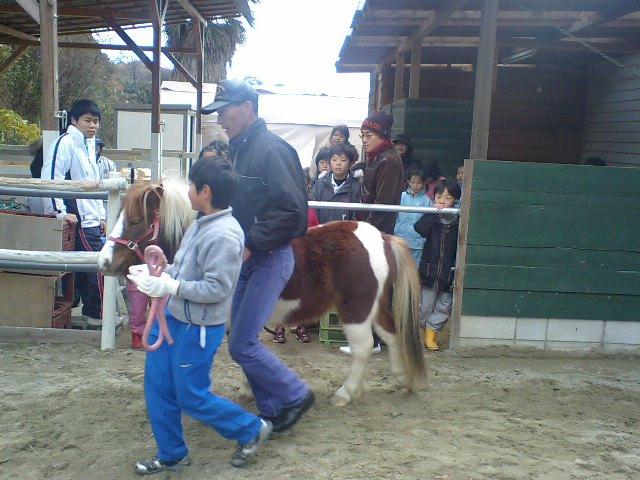 いのちのプロジェクト曳き馬体験