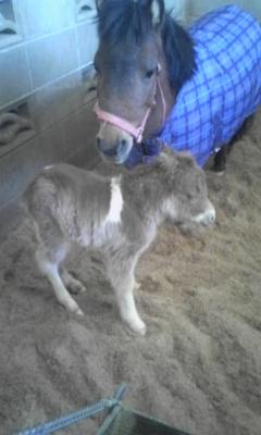 馬の赤ちゃん