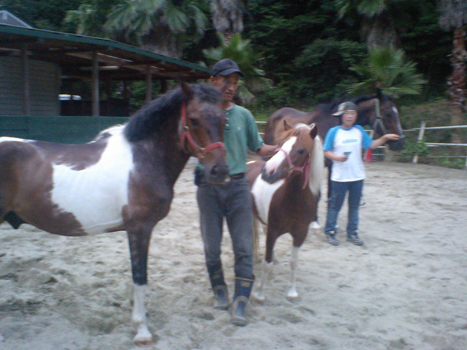 新しいセラピー馬!