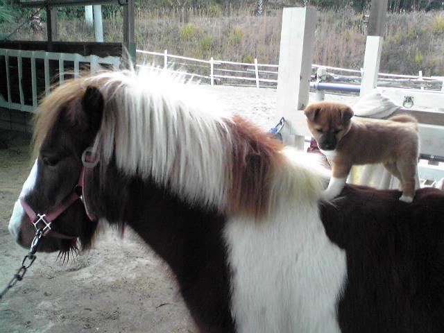 馬が結ぶ絆