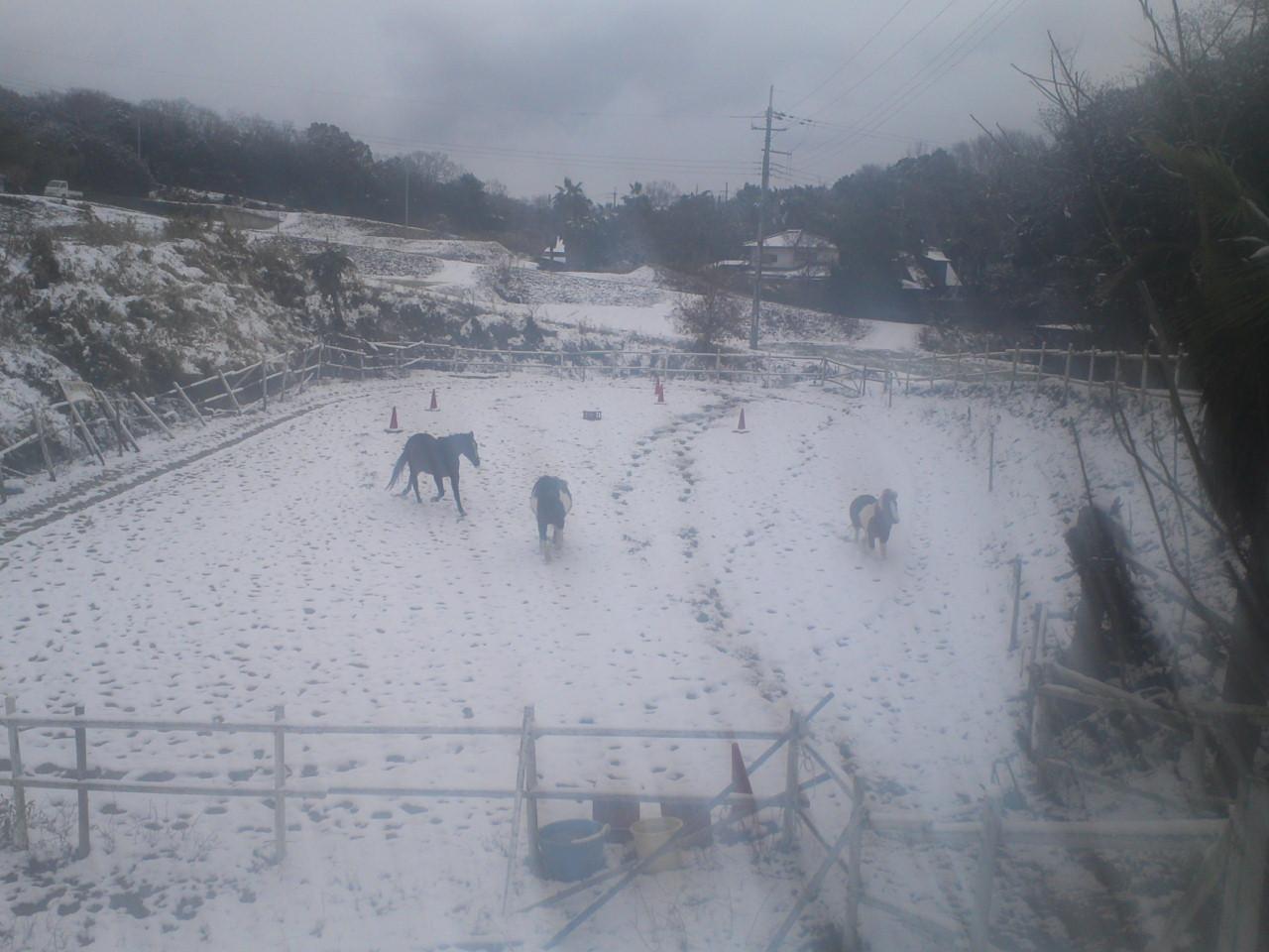 セラピーファームは雪景色