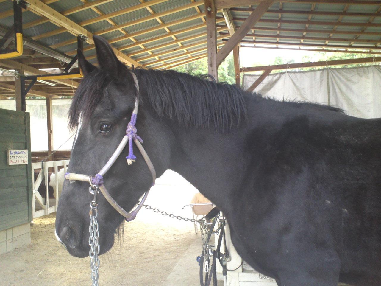 シークの馬