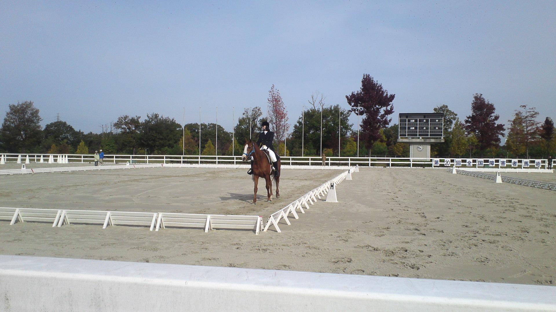 初級馬場馬術常歩